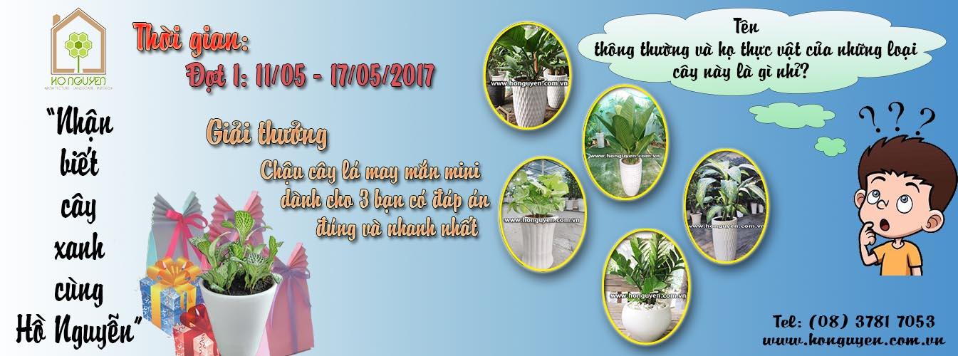 Nhận Biết Cây Xanh Cùng Hồ Nguyễn